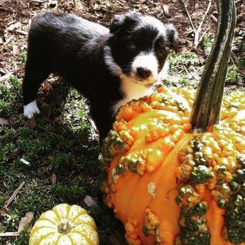 ffly 5 weeks ugly pumpkin